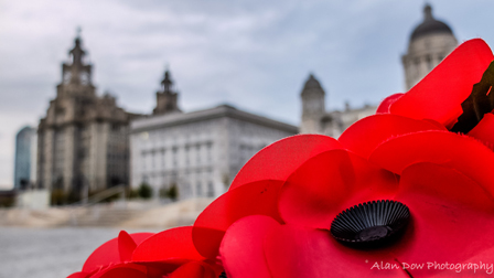 Liverpool Poppies by Alan Dow